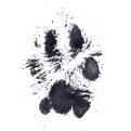 rufus paw
