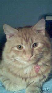 cropped-nov-18a-2006.jpg