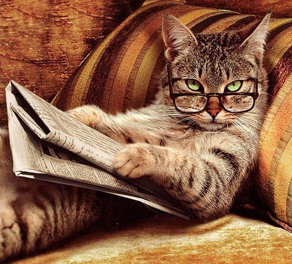 tabby-reading