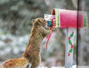 squirrel-b