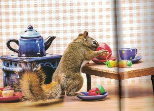 squirrel-c