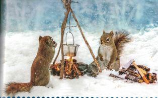 squirrel-d