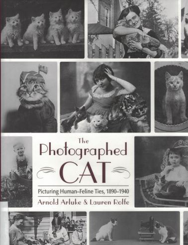 photgraphed-cat