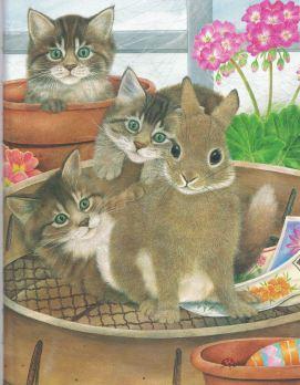 Beautiful Anne M. kittens.