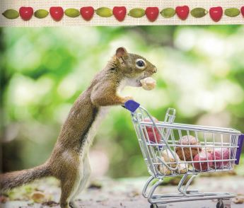 secret lives of squirrels b