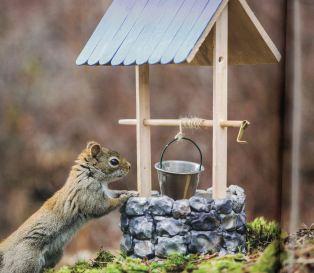secret lives of squirrels c