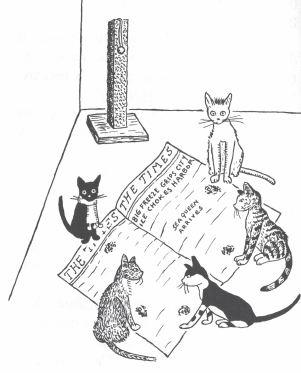 the hotel cat b