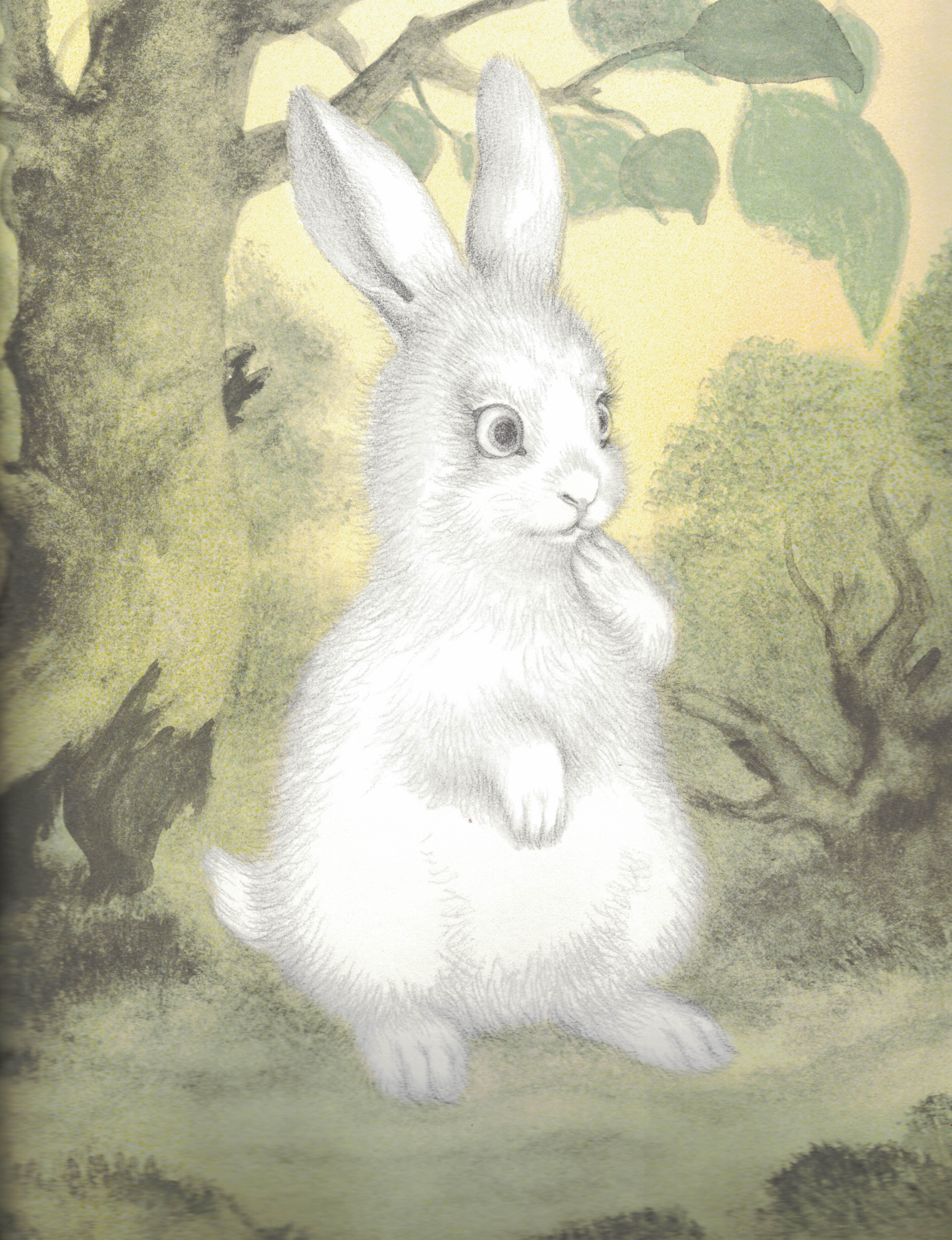 Cat bunny interracial love