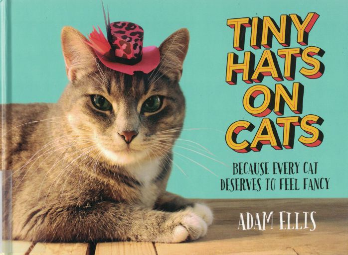 tiny hats on cats a